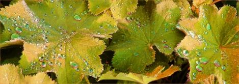 Water droplets in brown